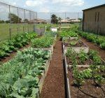 Four Seasons gardening program offers spring series