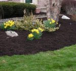 How to choose the best mulch for home landscaping