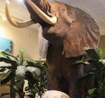 Midwest Museum of Natural History: Sycamore's hidden gem for science-lovers