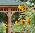 McHenry County Calendar of Events July 25 – Aug. 1