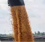 Cahokia grain terminal get grain deal as trade war with China heats up