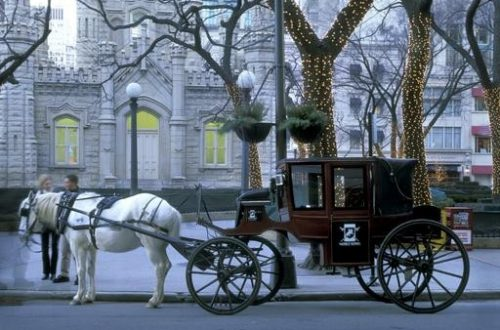 Watchdogs look out for carriage horses in Chicago