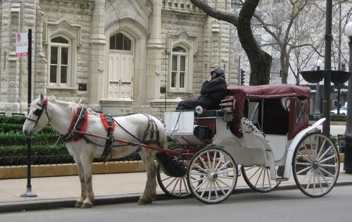 Decision on horse-carriages in Chicago drawn out