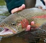 Fall trout, fly-fishing season opens in October