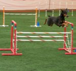 Dogs fly high at Peoria dog club agility competition in Pekin