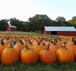 Enjoy the fall season at one of the region's harvest pumpkin farms