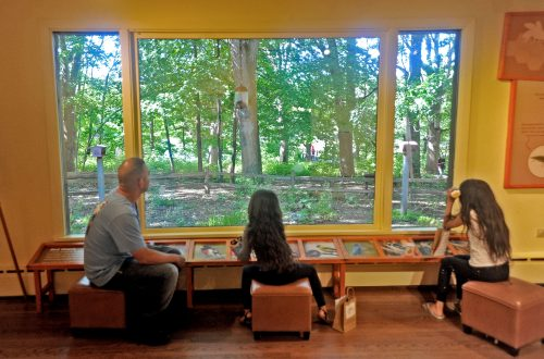 Red Oak at 40 — nature center a place of learning and reconnecting