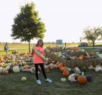 Morton's Ackerman Farms a traditional fall destination to spend the day