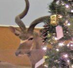 DeKalb County Calendar of Events Nov. 28 – Dec. 6