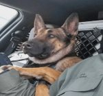 K-9 unit staying with Metamora Police Department