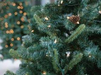 Green, white or plastic: The business of  Christmas trees
