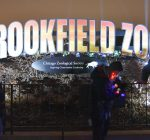 Brookfield Zoo's Holiday Magic makes season bright
