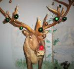 DeKalb County Calendar of Events Dec. 19 – Dec. 26