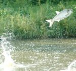 Carp creations, Michigan money gets state's attention