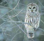 Kendall Forest District hosts winter wildlife festival