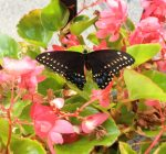 Chillicothe Library looks to spring with program on pollinators