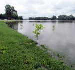 Challenges for planting and re-greening after a flood