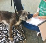 Fox Valley group provides comfort in trauma with therapy dogs