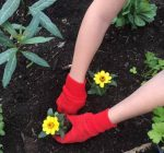 Gardening in schools is more than a grade