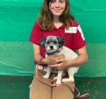 West suburban 4-H Members demonstrate skills with canines
