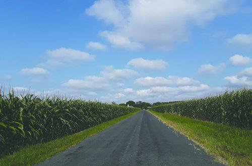 Illinois farmers cautiously approach harvest