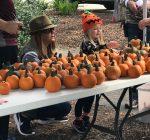 Fall spirit fills the air at Yorktoberfest