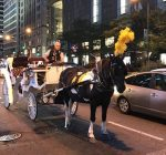 Horse carriages likely to get licenses, but future in doubt