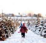 Where to get a fresh cut Christmas tree in the suburbs