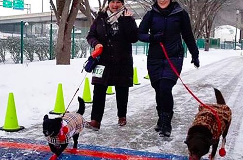 Proceeds from Frosty 5K run benefit Family Core's