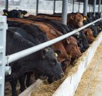 Coronavirus tests meat supply chain as farm groups keep food on shelves
