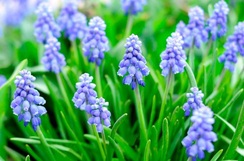 Staying at home gives time to plan gardens, think spring