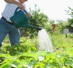 Best watering methods for gardens during hot-weather gardening