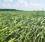 R.F.D. NEWS & VIEWS: Will the derecho lift corn prices?