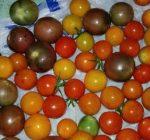 How to prolong shelf life of home garden produce