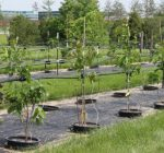 Select the right tree for fall planting in Illinois