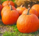 How to pick a pumpkin for cooking or carving