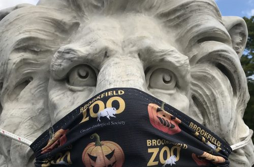 Indoor attractions remain closed but Brookfield Zoo welcomes visitors