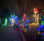 Cosley Zoo prepares for Festival of Lights, Christmas trees sale