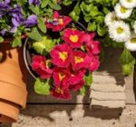 Register now for virtual Home, Lawn, and Garden Day