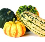 THE KITCHEN DIVA: Winter squash Is healthy addition to any meal