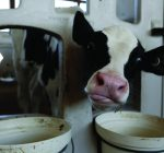 R.F.D. NEWS & VIEWS:  Dairy producers eligible for grants