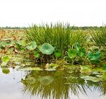 Illinois EPA grant to fund wetlands project near Cahokia Creek