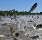Non-native invasive species present major threat to ecosystems