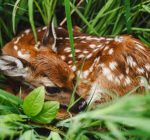 Experts say baby wildlife on their own rarely need rescuing