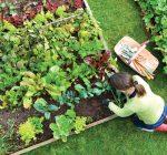 Community gardens change lives, communities