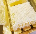 Specialty honey farm adds sweetness, more to beekeepers' lives