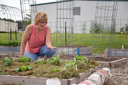Master Gardeners team up with health dept. to grow food for local families