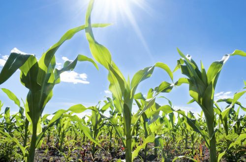USDA designates six Illinois counties disaster due to drought