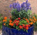 Local Extension master gardener program offers hybrid training