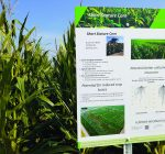 R.F.D. NEWS & VIEWS: Crop condition continues downward tumble